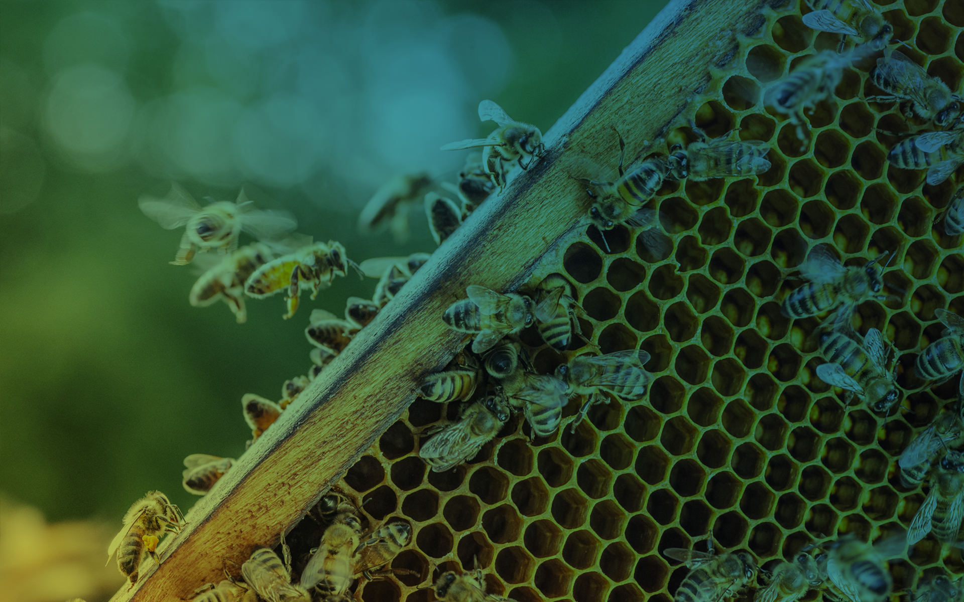 Acea and the biomonitoring project with Urbees